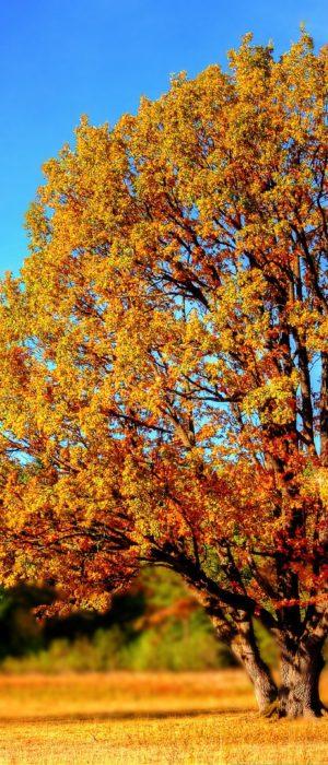 Openmalta-autumn
