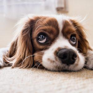 Openmalta-preintermediate-dog