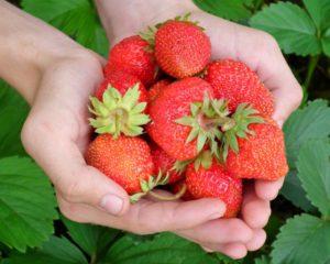 Openmalta-strawbery